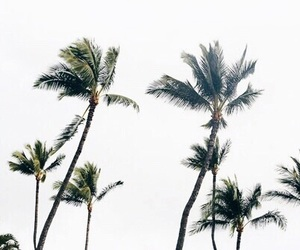 beach, paradise, and palmtrees image