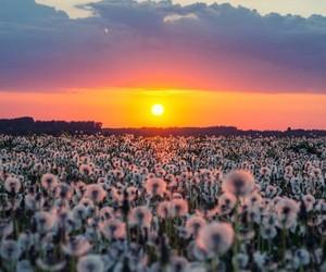 flowers, sun, and landscape image