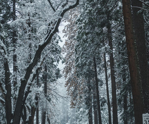 cold, forest, and path image