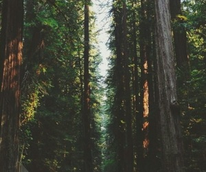 forest, gorgeous, and lifestyle image