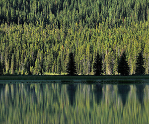 Banff National Park, forest, and reflections image