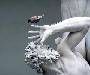 art, bird, and cool image