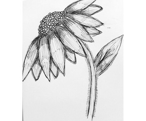 art, biro, and daisy image