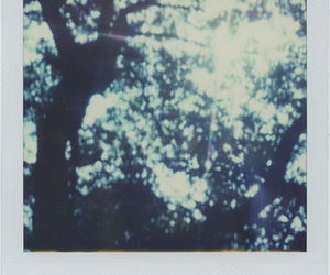 light, polaroid, and trees image