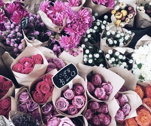 flowers, pink, and purple image