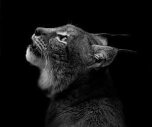 photography and lynx image