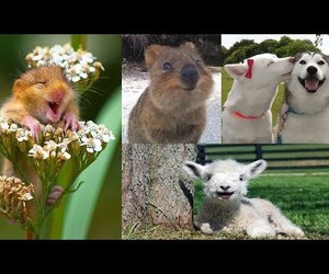 smile and happy animals image