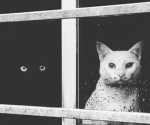 cat, lov, and window image