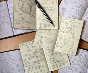 anatomy, medicine, and notes image