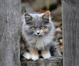 cats, animals, and kitten image