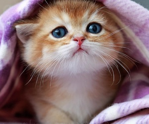 kitten, adoreable, and cute image