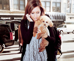 dog, cute, and ashley tisdale image