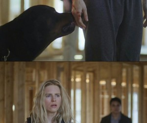 theo, oa, and britmarling image