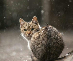 cat, animal, and winter image