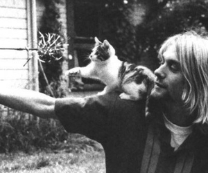 cat, kurt cobain, and nirvana image