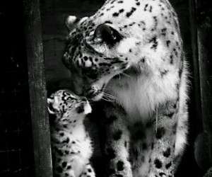 animals, bw, and Cutes image