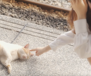 my melody, 하슬, and loona image