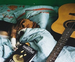 dog, guitar, and book image