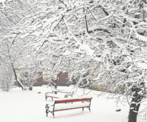 bench, park, and winter image