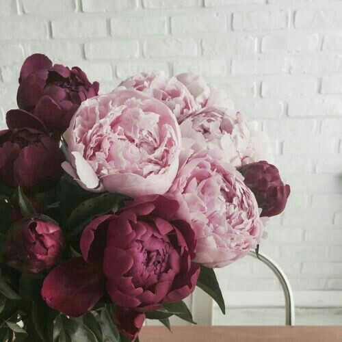 336 Images About Fleurs On We Heart It See More About Flowers