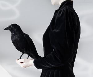 black, photo, and raven image
