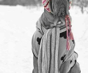 cute dog snow image