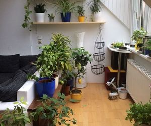 bedroom, decoration, and plants image