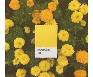 154 images about -Yellow Tumblr Aesthetic- on We Heart It