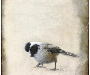 earth tones, fine art photography, and little bird image