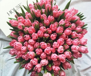 beautiful, present, and tulips image