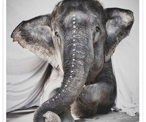 elephant, animal, and indie image