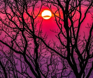 sun, tree, and sunset image