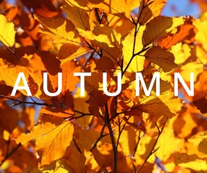 autumn, easel, and fall image
