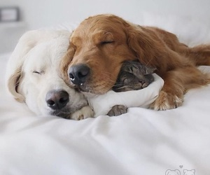 dogs, cute, and lovely image