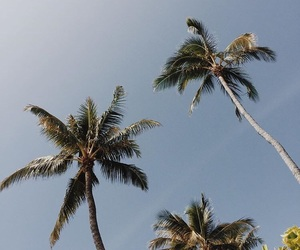 palm, Sunny, and travel image