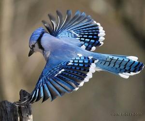 amazing, birds, and blue birds image