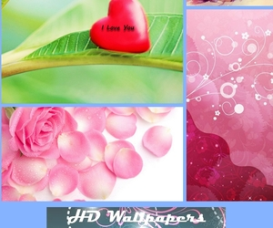 cute wallpapers, cute hd wallpapers, and download cute wallpapers image