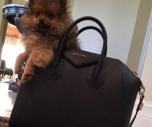 dog, Givenchy, and bag image