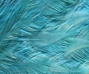 Bleu, plume, and turquoise image