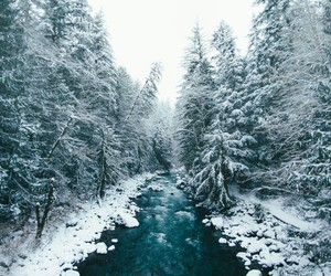 snow, forest, and river image