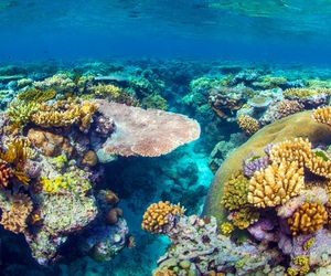 coral reef, sea, and nature image