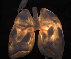 bird, light, and lungs image