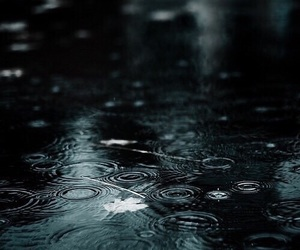 rain, water, and leaves image