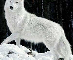 Animales, belleza, and blanco image