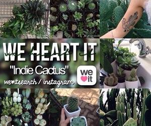 cactus, indie cactus, and indie image