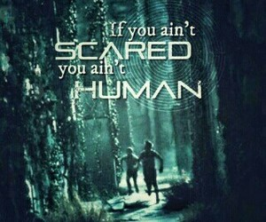 quote and the maze runner image