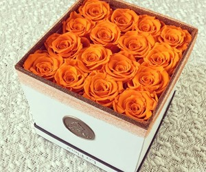 pretty, roses, and beautiful image