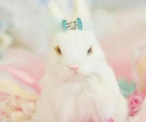 bunny, pink, and animal image