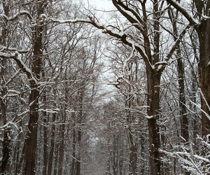 forest, snow, and ❄ image
