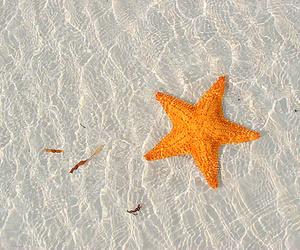 summer, beach, and starfish image
